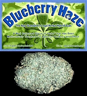 Hybrid-Bud Smoke Shop Blend - Blueberry Hybrid Bud
